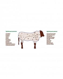 Quarto Posteriore intero di Chianina completo di Lombata 85 kg - Carni Pregiate Certificate - Fattoria Luchetti