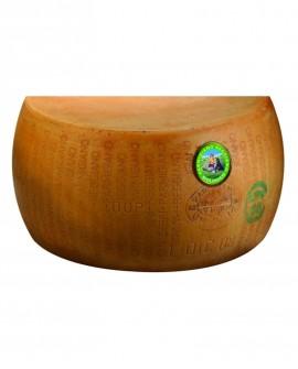 1/2 Forma SV taglio verticale Parmigiano Reggiano DOP BIOLOGICO classico 20-22 mesi - 19 kg - Montanari & Gruzza